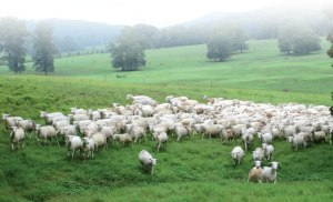 And when he putteth forth his own sheep, he goeth before the, and  the sheep follow him: for they know his voice